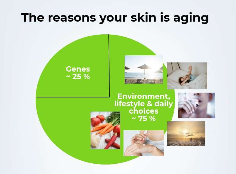 Infograph over the factors that cause wrinkles and other signs of skin aging.